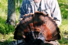 Bighorn-Turkey(303)